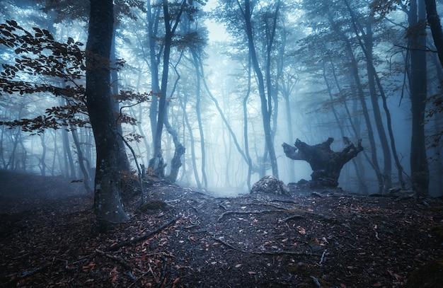 Mistyczny ciemny jesień las ze szlakiem w niebieskiej mgle. krajobraz z zaczarowanymi drzewami z pomarańczowymi liśćmi na gałęziach.
