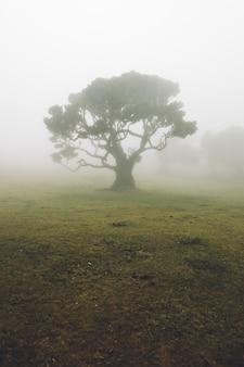 Mistyczny fanal laurisilva las przy madery wyspą, portugalia