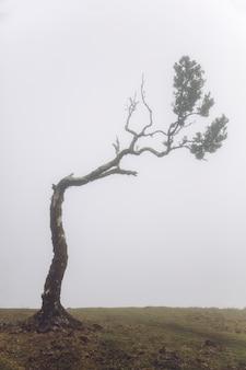 Mistyczny fanal w mglistym lesie laurisilva