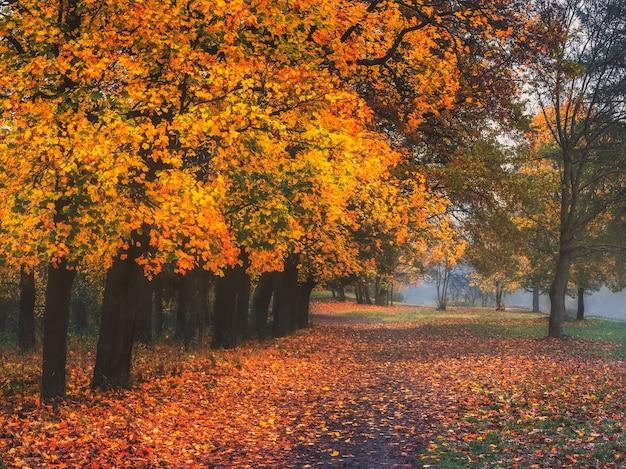 Mistyczny jesienny krajobraz z poranną mgłą i ścieżką w parku.