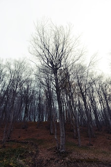 Mistyczny jesienny las we mgle