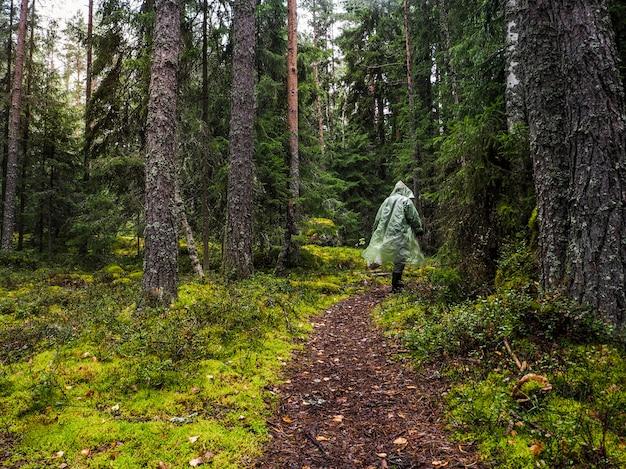 Mistyczny las deszczowy. głęboko w lesie. leśnik idzie szlakiem przez gęsty las.