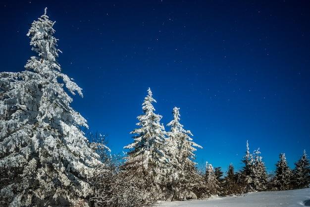 Mistyczny magiczny nocny krajobraz śnieżnej jodły