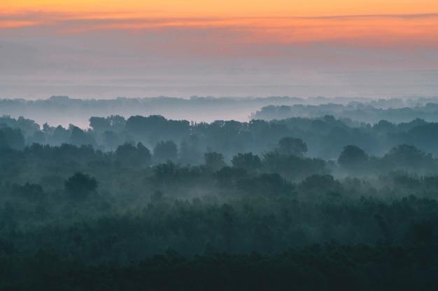 Mistyczny widok z góry na las we mgle wczesnym rankiem.