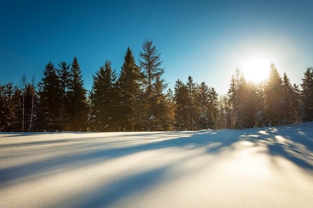 Mistyczny widok z lotu ptaka na stoki narciarskie górskich wzgórz i drzew pokrytych śniegiem w słoneczny, pogodny dzień z błękitnym niebem.