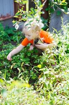 Młoda blondynka zbieranie jagód