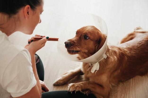 Młoda dziewczyna patrząc na swojego psa golden retriever z elżbietańskim plastikowym stożkiem