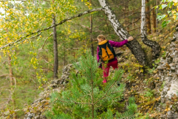 Młoda jodła w górskim lesie w tle w rozmyciu kobieta uprawia trekking