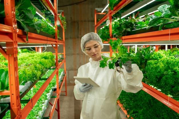 Młoda kobieta biolog w ochronnej odzieży roboczej stojąca przy półce z zieloną sałatą w pionowej farmie i trzymająca mały garnek z sadzonkami