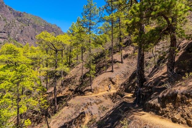 Młoda kobieta na pięknym szlaku trekkingowym la cumbrecita na wyspie la palma obok caldera de taburiente na wyspach kanaryjskich. hiszpania