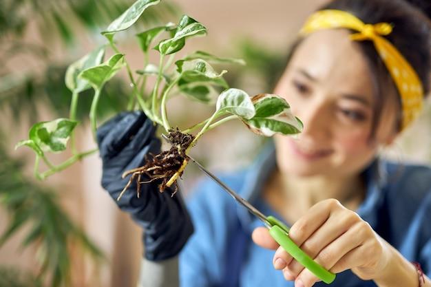 Młoda kobieta ogrodniczka za pomocą nożyczek do przycinania lub przycinania roślin domowych w domu