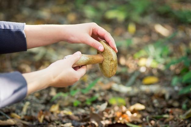 Młoda kobieta ręce zbieranie łzawienie grzybów jadalnych