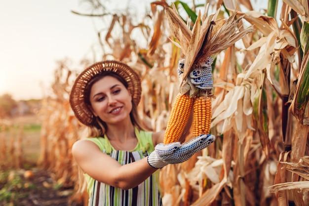 Młoda kobieta rolnik zbieranie zbiorów kukurydzy