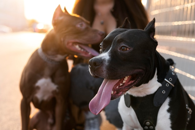 Młoda kobieta spędza czas ze swoimi psami na świeżym powietrzu