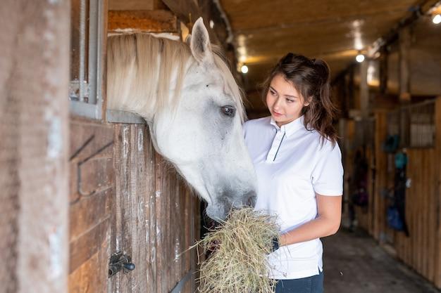 Młoda kobieta sportowa w casual, patrząc na białego konia podczas karmienia jej świeżym sianem w stajni po wyścigu lub treningu