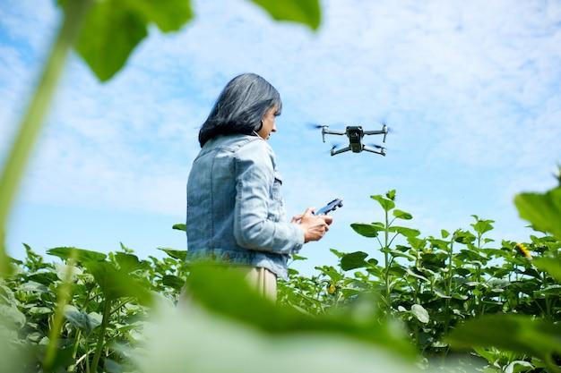 Młoda kobieta uczy się pilotować swojego drona, kobieta używa, pilotuje, lata dronem na polu słoneczników, lato, rolnictwo.