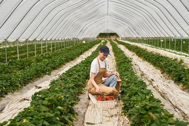 Młoda kobieta w fartuchu zbiera truskawki w koszyku