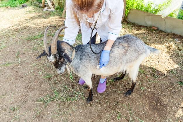 Młoda kobieta weterynarii ze stetoskopem trzyma i bada kozę na tle ranczo