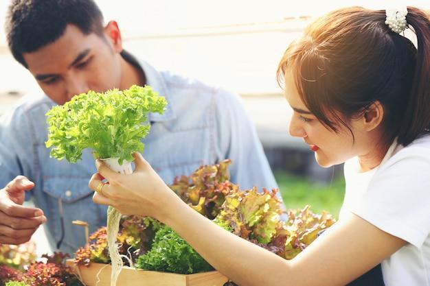 Młoda kobieta zbiera warzywa z hydroponicznej farmy, a młody człowiek pomaga. oboje są szczęśliwi.