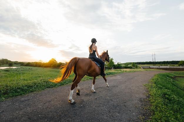 Młoda ładna dziewczyna dżokej na koniu czystej krwi ogiera jest zaangażowana w jazdę konną o zachodzie słońca. sporty jeździeckie., jazda konna.