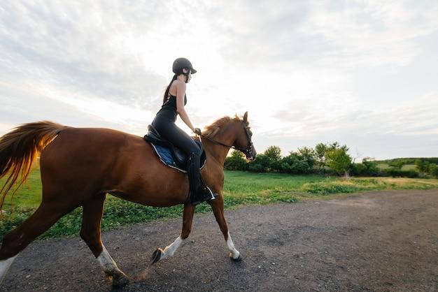 Młoda ładna kobieta dżokej na ogierze pełnej krwi zajmuje się jazdą konną o zachodzie słońca.