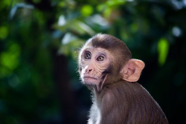 Młoda małpa, znana również jako makak rezus, siedząca pod drzewem w wesołym nastroju