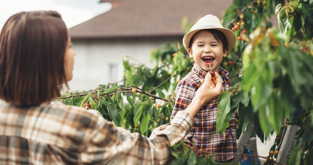 Młoda matka i jej syn jedzą wiśnie z drzewa, wstają po drabinie