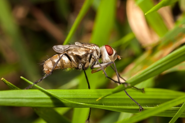 Młoda nowonarodzona mucha domowa z zamkniętymi skrzydłami - mucha domowa