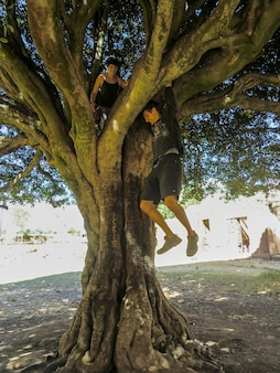 Młoda para wspina się po gałęziach drzewa