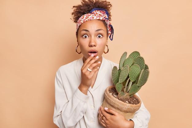 Młoda piękna afroamerykanka ma zszokowany wyraz twarzy wyłupiaste oczy trzyma doniczkowy kaktus nie może uwierzyć w zaskakujące wieści nosi białą koszulową opaskę na głowie odizolowaną nad brązową ścianą