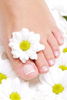 Młoda piękna czysta kobieca stopa z kwiatem rumianku wokół niego