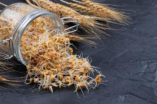 Młoda porośnięta pszenica w szklanym słoju z kłosami pszenicy. ziarna organiczne dobre do sałatek, zdrowej żywności. zbliżenie