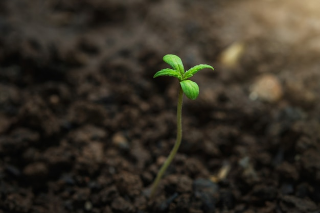 Młoda roślina marihuany w ogródzie z światłem słonecznym