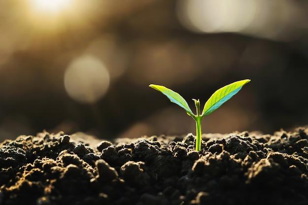 Młoda roślina rosnąca na ziemi ze słońcem w naturze. koncepcja ekologicznego dnia ziemi