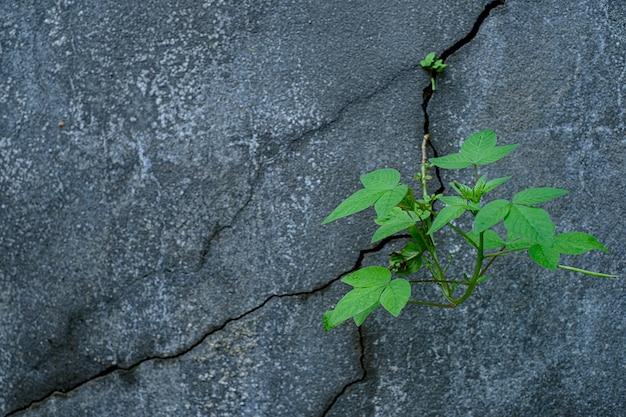 Młoda roślina rosnąca przez popękaną betonową podłogę