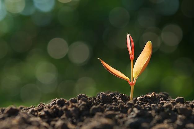 Młoda roślina rośnie na glebie z zieloną przyrodą