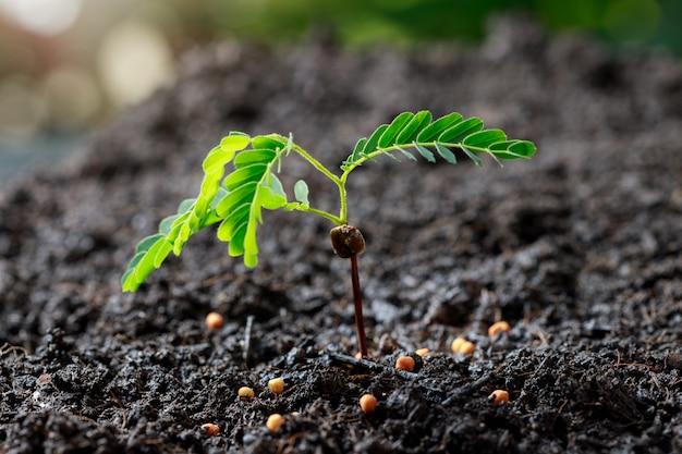 Młoda roślina rośnie na żyznej glebie.