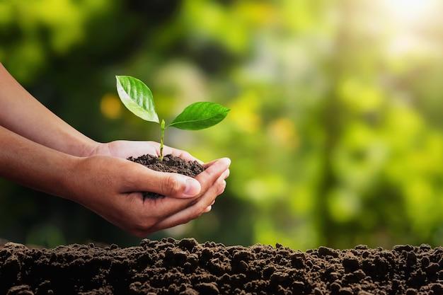 Młoda roślina rośnie pod ręką. koncepcja ekologicznego środowiska