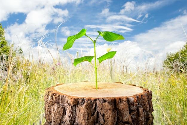 Młoda roślina w starym drewnie, koncepcja nowego życia. symboliczny rozwój biznesu. pojęcie ekologii.