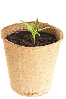 Młoda roślina wyrasta z żyznej gleby jest izolowana na białym tle