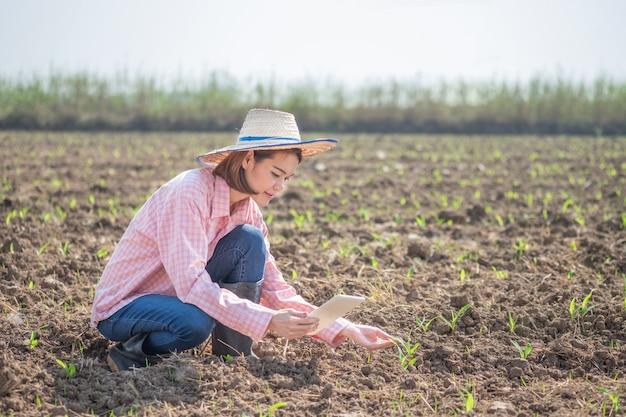 Młoda średniorolna azjatykcia kobieta siedzi mądrze pastylkę w kukurydzanym polu i trzyma. technologia koncepcji obrazu gospodarstwa.