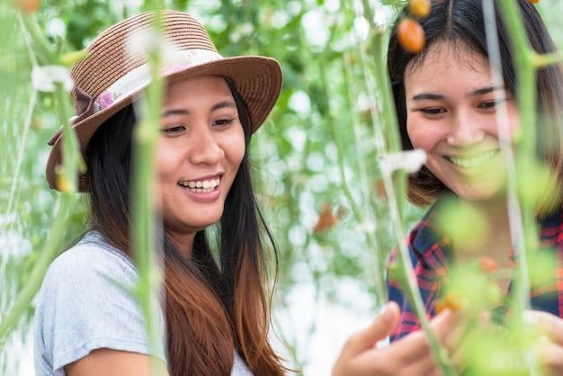 Młoda uśmiechnięta kobieta pracownik rolnictwa z przodu i kolega z tyłu i skrzyni pomidorów z przodu