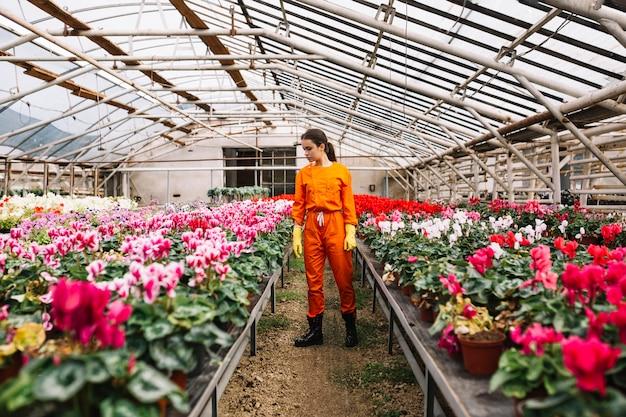 Młoda żeńska ogrodniczka egzamininuje kwiaty w szklarni