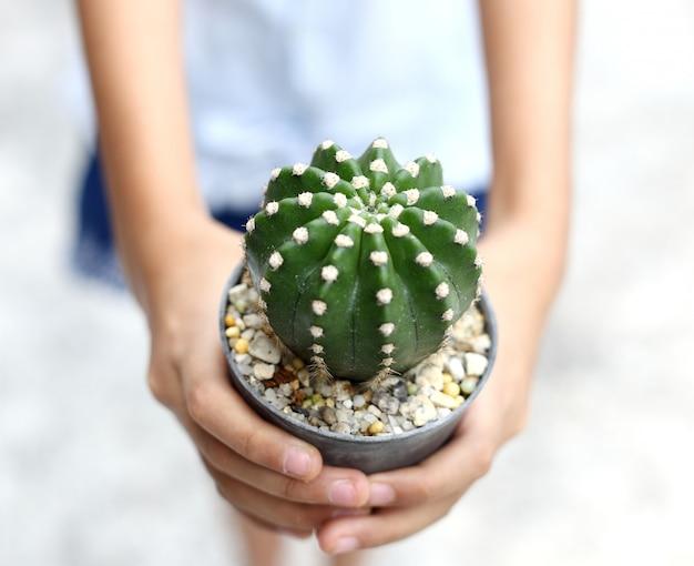 Młode dłonie trzymają doniczkę z kaktusami i podają innej
