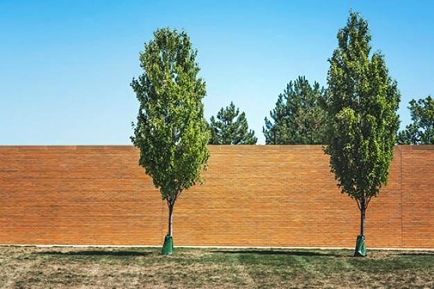 Młode drzewa