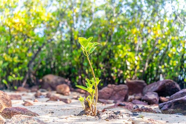 Młode drzewo namorzynowe wzdłuż turkusowo-zielonej słonej wody
