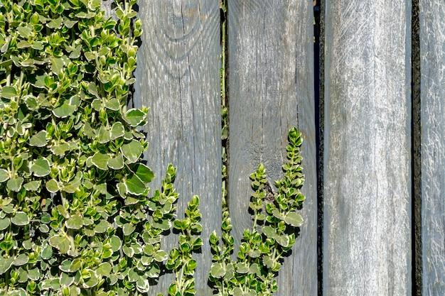 Młode gałązki roślina z zielonymi liśćmi na drewnianym tle w słonecznym dniu. miejsce na tekst.