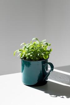 Młode kiełki / sadzonki rukoli w metalowym zielonym kubku w słońcu