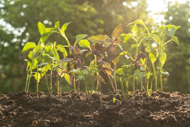 Młode małe kolorowe rośliny pod słońcem