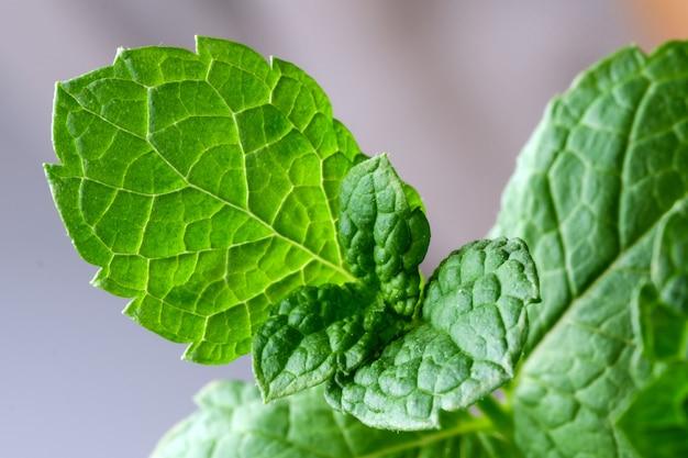 Młode pędy i liście aromatycznej mięty pieprzowej z bliska makrofotografii